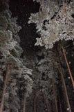 Chutes de neige dans la forêt de pin de nuit Photos stock