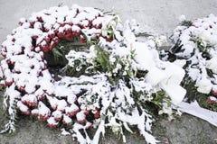 Chutes de neige de fleurs de couronnes Photographie stock