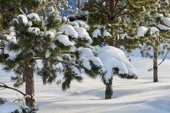 Chutes de neige en stationnement Images stock