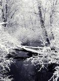 Chutes de neige et crique (vue 1) Images stock