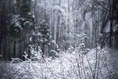 Chutes de neige de fond dans la forêt d'hiver Photo stock