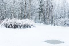 Chutes de neige de fond dans la forêt d'hiver Images libres de droits