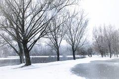 Chutes de neige de fond dans la forêt d'hiver Photo libre de droits