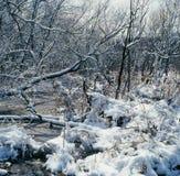 Chutes de neige latérales de crique Photo stock