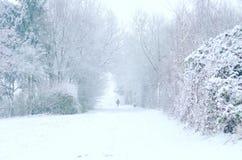 chutes de neige lourdes Photographie stock libre de droits