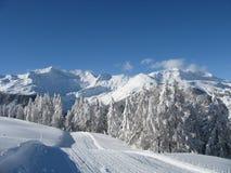 chutes de neige lourdes Images libres de droits