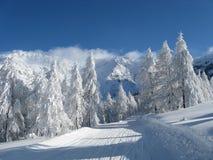 chutes de neige lourdes Photos libres de droits