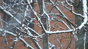 chutes de neige lourdes blizzard banque de vidéos