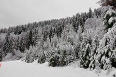 Chutes de neige lourdes sur la forêt dans les hautes montagnes, photo stock