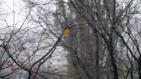 Chutes de neige nues d'arbre et d'automne banque de vidéos