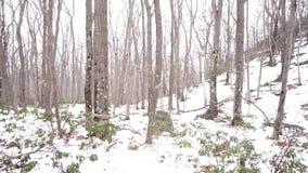 Chutes de neige sur le laurier de montagne dans Catskills banque de vidéos