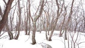 Chutes de neige sur les arbres dormants dans Catskills banque de vidéos