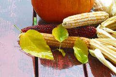 Chuva 4344 do outono. Agricultura. novembro Foto de Stock
