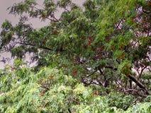 A chuva cai nas copas de árvore imagens de stock