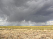 Chuva cinzenta no campo dourado Fotos de Stock