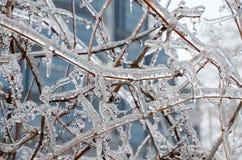 Chuva congelada Fotografia de Stock