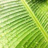chuva da gota Foto de Stock