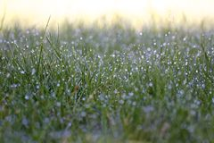 Chuva da manhã Fotografia de Stock