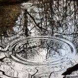A chuva deixa cair círculos perfeitos Foto de Stock Royalty Free