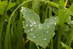 A chuva deixa cair a flor da cama Fotos de Stock