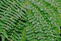 A chuva deixa cair pérolas imagens de stock