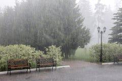 Chuva do verão Fotos de Stock