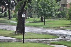Chuva do verão Foto de Stock Royalty Free