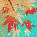 Chuva e folhas