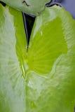 Chuva e folhas Fotos de Stock Royalty Free