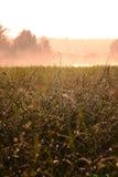 Chuva e luz do sol do verão foto de stock