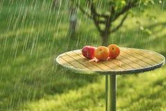 Chuva e tomates do verão imagens de stock