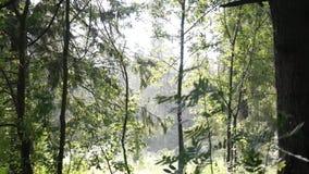 Chuva na floresta video estoque