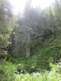 A chuva na floresta Fotografia de Stock Royalty Free