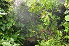 Chuva na floresta tropical tropical fotos de stock