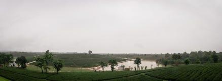 Chuva na plantação de chá nos montes Fotografia de Stock Royalty Free