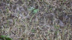 A chuva pesada faz a água inundada na grama seca filme