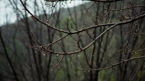 Chuva pesada no cacho em Califórnia durante o inverno em fps de HD 24 vídeos de arquivo