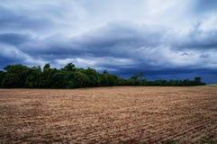 Chuva que vem nos campos 2 Fotografia de Stock