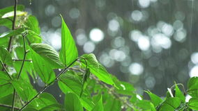 Chuva tropical vídeos de arquivo