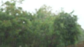 Chuva tropical de derramamento gotas da chuva na perspectiva das árvores verdes 4k, movimento lento video estoque