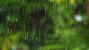 Chuva tropical do movimento lento vídeos de arquivo