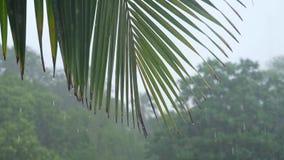 Chuva tropical pesada na ilha durante o dia video estoque