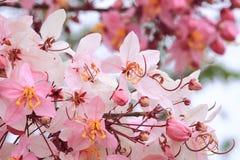 Chuveiro cor-de-rosa Foto de Stock Royalty Free