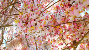 Chuveiro cor-de-rosa Fotografia de Stock
