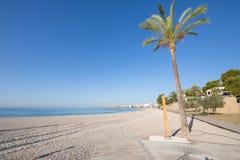 Chuveiro e palmeira públicos na praia de Benicassim imagem de stock royalty free