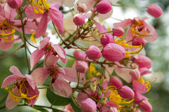 Chuveiros de arco-íris de florescência Imagem de Stock