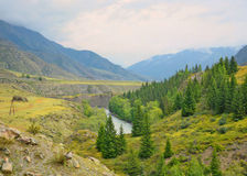 Chuya River Valley di estate, montagne di Altai, Siberia, Russia Immagine Stock Libera da Diritti