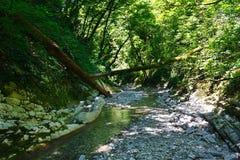 Chwalebnie halna mała rzeka wśród południowych lasów Obrazy Royalty Free