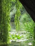 Chwalebnie pogodny jeziorny widok od weepy wierzbowego drzewa beneath Fotografia Stock