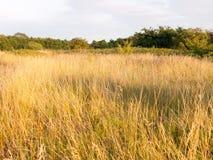 Chwalebnie słońce wygrzewał się set traw płochy w łące Zdjęcia Stock